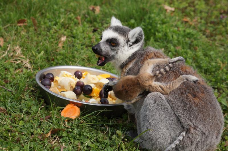Nowe atrakcje wrocławskiego Zoo