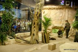 Wroc�awskie zoo - Smoki Indonezji