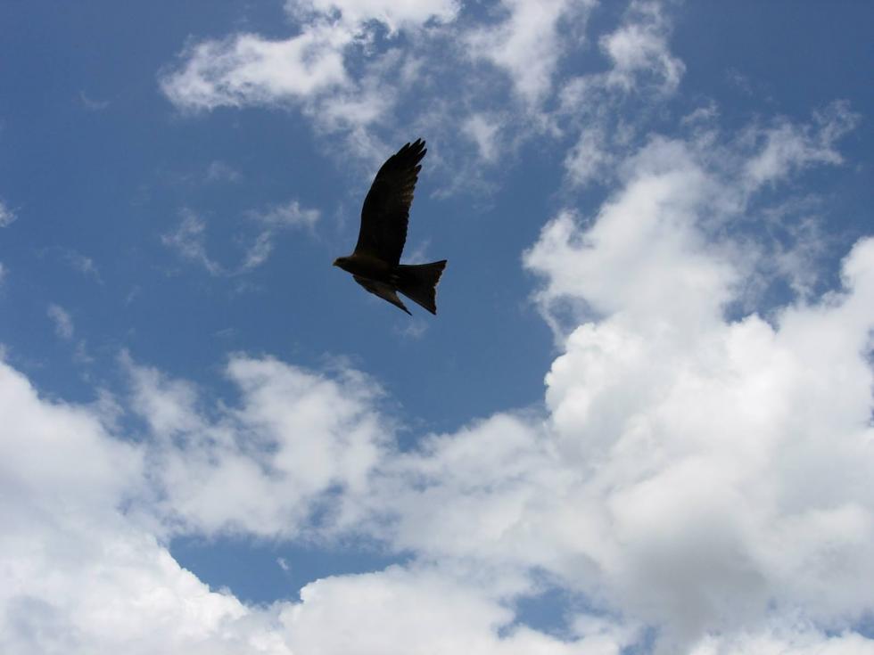 Inwestycje wSiechnicach ochronią cenny gatunek ptaków - kanię rudą
