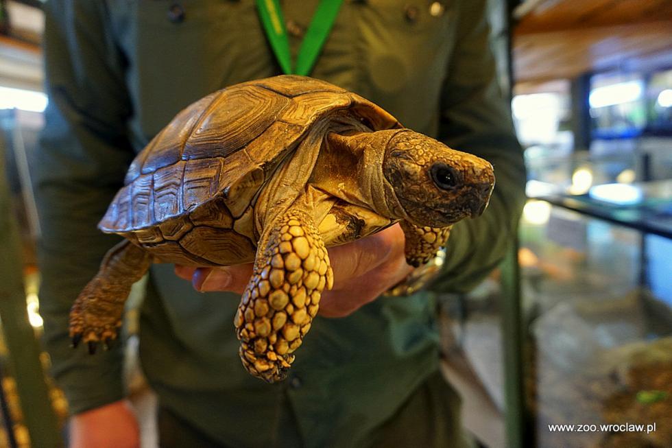 Nowi mieszkańcy wrocławskiego zoo - zagrożony unikat zArgentyny