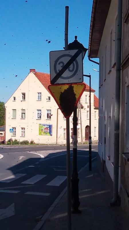 Pszczeli rój na... drogowym znaku