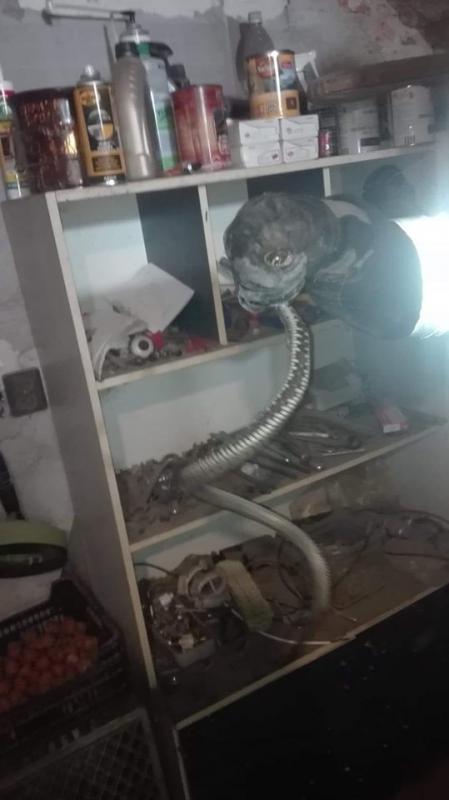 Złapali metrowego węża