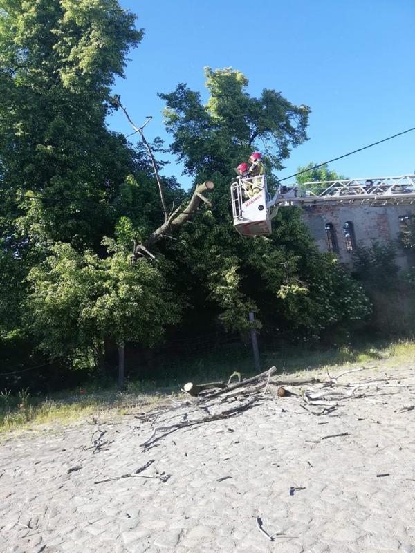 Drzewo runęło na linię energetyczną