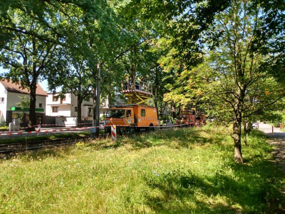 Remont torowiska na Olszewskiego wstrzymany przez… dęby